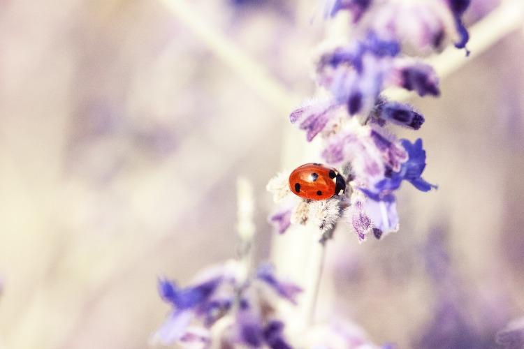 ladybug-676448_1920