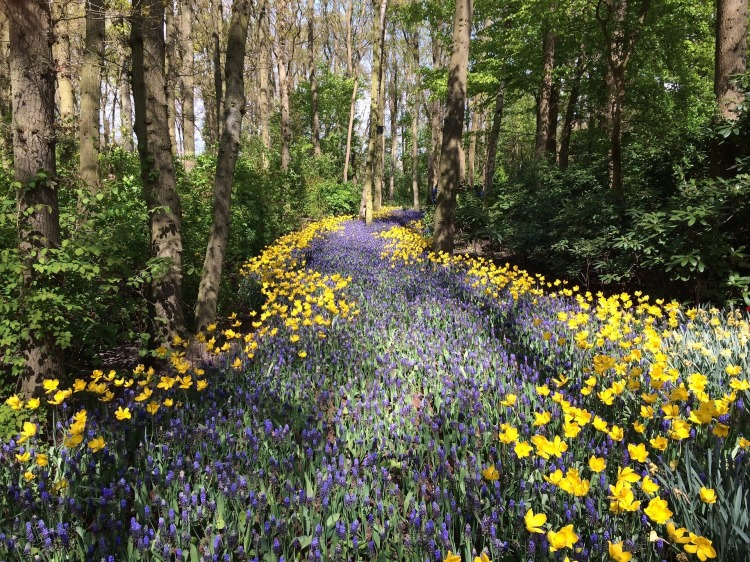 path flowers-1246249_1920